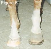 Crack in sole hoof